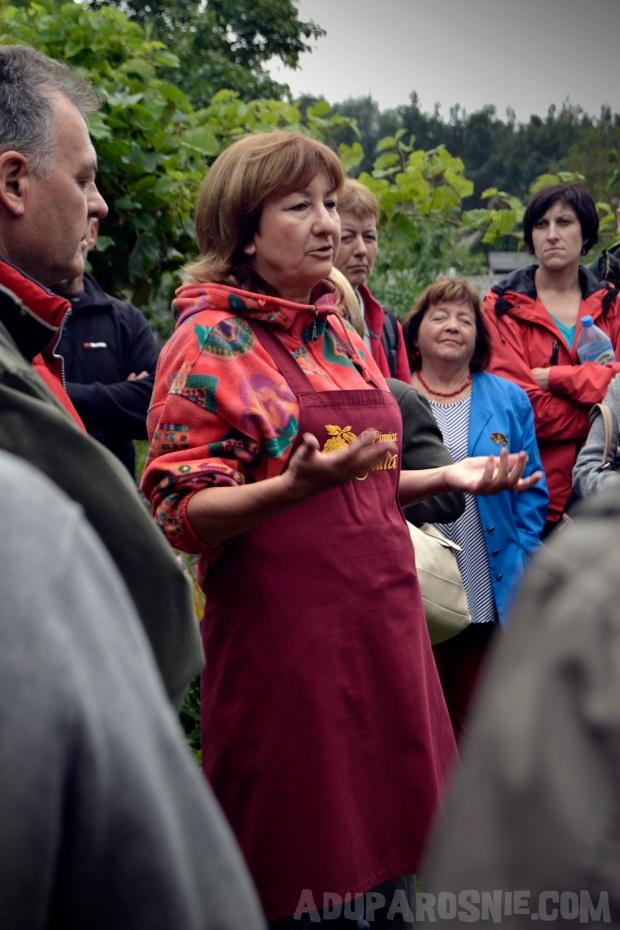 winnica julia (2)